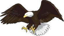 Eagle Landing Vector Illustration
