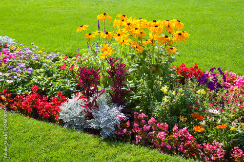 Fototapeta Bright flowers on the flowerbed in city park.