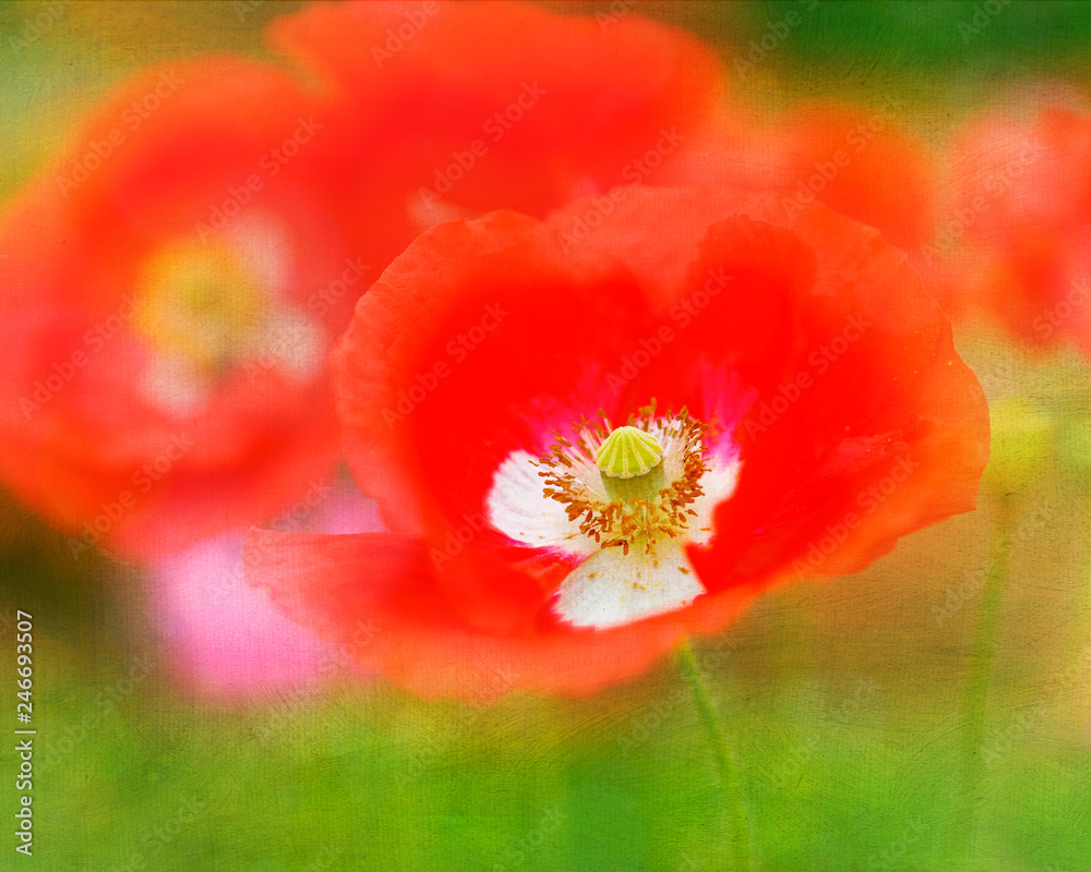 Garden poppies with added texture.