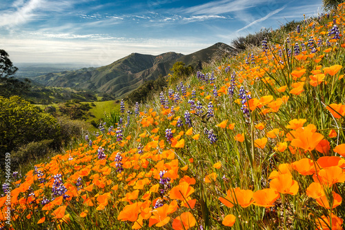 Wildflowers growing on a mountainside - 246695519
