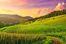 Langhe Vineyards View, Barolo ...