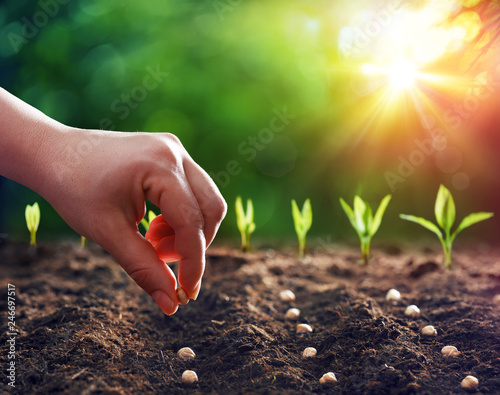 Foto Hands Planting The Seeds Into The Dirt