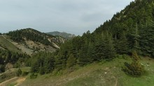 Nature Forest And Mountains La...