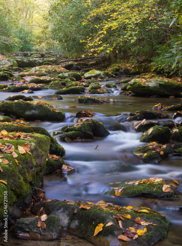 Printed kitchen splashbacks Forest river Stream in the Smokies in golden colors of fall.