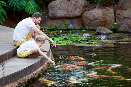 Valokuvatapetti feeding koi fish