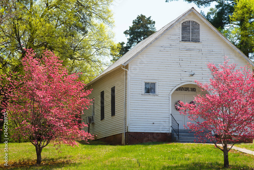 Pink Dogwood Trees are blooming beside a little country church.