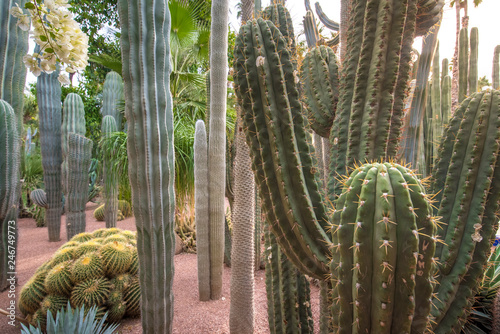 Foto Panorama of The Majorelle Garden is a botanical garden and artist's landscape park in Marrakech, Morocco