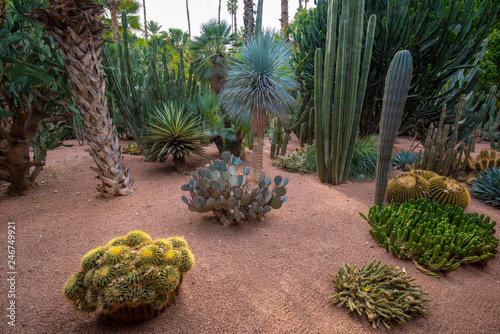 Canvas Print Panorama of The Majorelle Garden is a botanical garden and artist's landscape park in Marrakech, Morocco