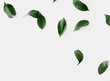 Green leaves mockup
