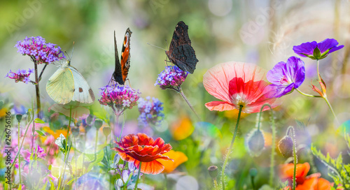 Fotografie, Obraz summer meadow with red poppies and butterflies