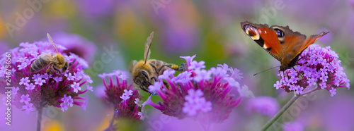 Photo bees and butterfly on the flower garden