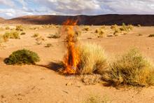 The Bush Burns Dry Grass, The ...