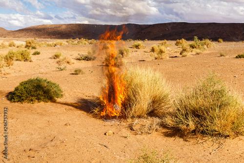 the bush burns dry grass, the Sahara desert Tapéta, Fotótapéta