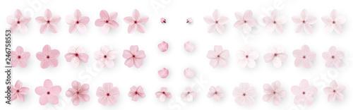 Fényképezés Realistic sakura or cherry blossom; Japanese Spring Flower Sakura; Pink Cherry Flower