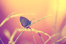 A Beautiful Butterfly On An Orange Background, Sitting And Resting.