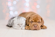 Puppy And Baby Kitten Sleeping Together On Festive Background