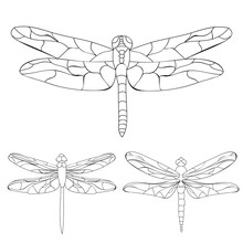 Vector Isolated, Dragonfly Ske...