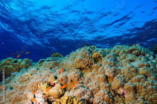 Fotobehang Koraalriffen Coral reef at the Red Sea, Egypt