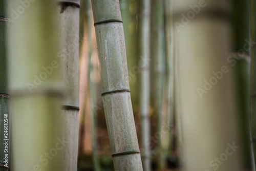 bamboo stems in the shadow.