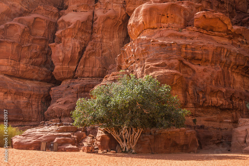 Fotografie, Obraz  Wadi Rum desert, Jordan