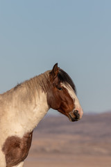 Beautiful Wild Horse Portrait