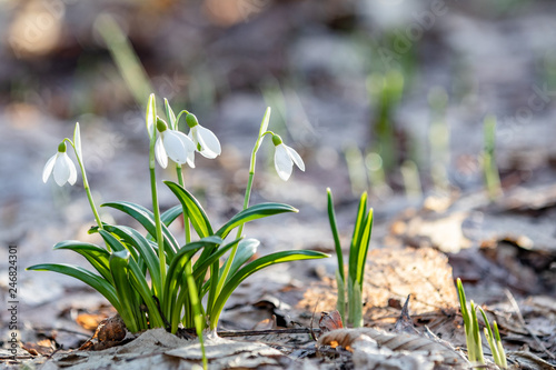 Obraz Spring sunny day in the forest, Easter picture - fototapety do salonu
