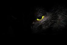 Black Cat's Green Eye Close Up