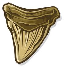 Prehistoric Shark Tooth