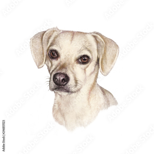 68b2d6ef93b98 Portrait of a white Dog. Cute puppy isolated on the white background ...