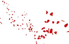 Red Rose Petals Fly Into The D...