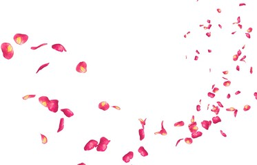 Red rose petals fly into the distance