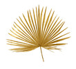 Leinwandbild Motiv Tropical golden leaf palm tree on white background. Top view, flat lay