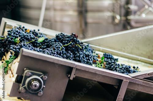Stampa su Tela Modern winery machine with grapes