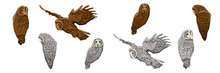 A Collection Of Owls In Variou...