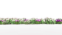3d Rendering Of Row Of Flowers Isolated On A White Background For Architectural Use Which Can Be Easily Cut