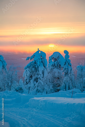 Garden Poster Winter sunset