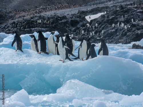 Tuinposter Pinguin Ooooh! Tourists!