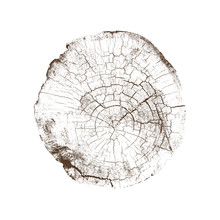 Wood Texture Of Cracks And Age From A Slice Of Tree. Cut Monotone Wooden Stump Isolated On White.