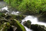 숲속의 계곡과 강 이끼 냇물 자연풍경 백그라운드 이미지