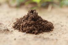 Ant's Nest On The Ground, Clos...