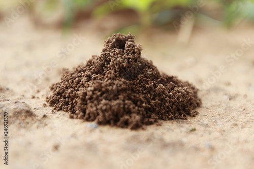 Ant's nest on the ground, Close up Canvas Print