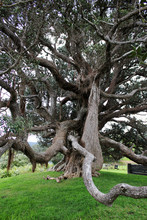 A Big Old Tree With Crazy Bran...
