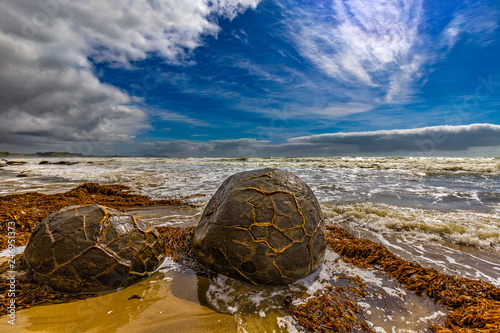 Foto op Plexiglas Oceanië New Zealand. South Island, Otago coast. The Moeraki boulders - spherical rocks, over 1 m across