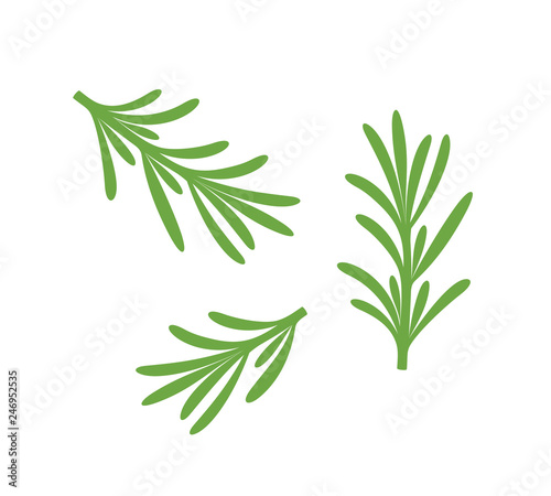 Fotografie, Tablou Rosemary branch. Isolated rosemary on white background