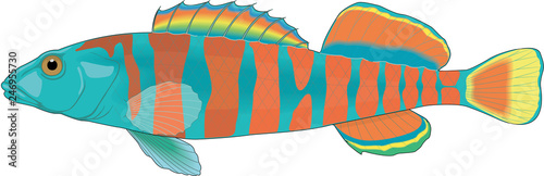 Valokuva Rainbow Darter Vector Illustration
