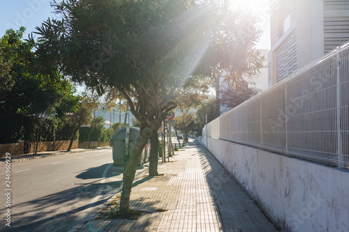 Staande foto Historisch geb. Sunny street with palms and trees in the old city of Alicante