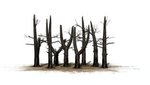 Several Burnt Trees On A Sand Area - Isolated On White Background