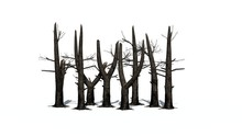 Several Burnt Trees With Shadow On The Floor - Isolated On White Background
