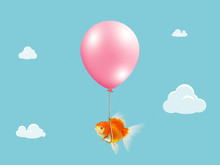 Goldfish Fly With Balloon . Mixed Media, Gold Fish Floating With Balloon On Blue Sky With Cloud Background