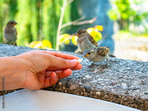 Fotografia  tender scene, of a small bird, which takes food, a bread crumb, from the hand of
